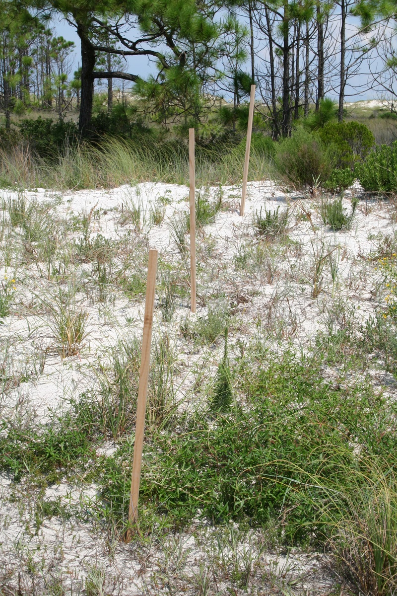 Stakes for measuring sand surface changes